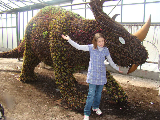 triceratops5